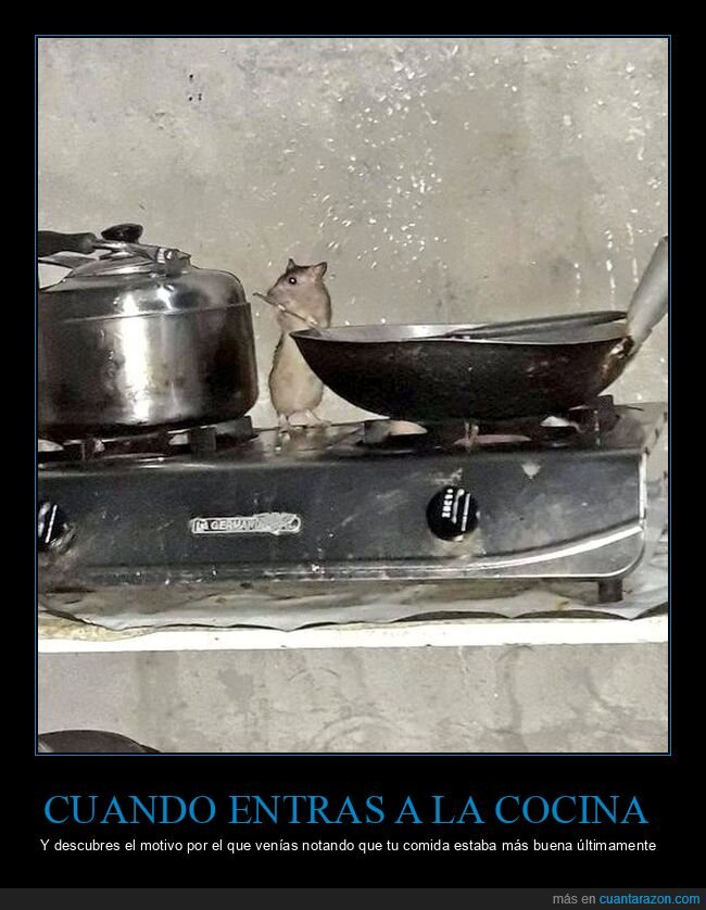cocina,rata,ratatouille,wtf