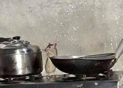 Enlace a Live action de Ratatouille
