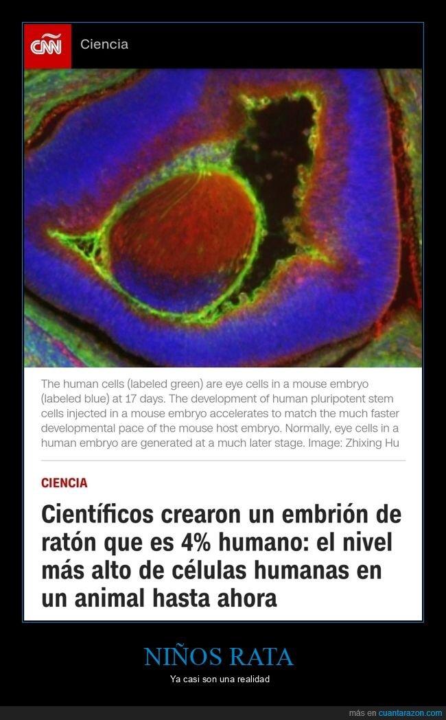 embrión,humano,ratón