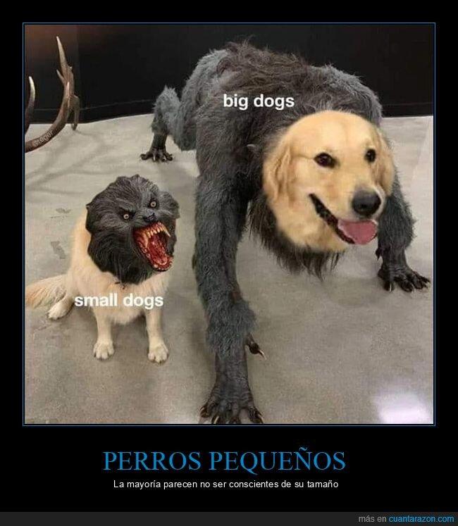 grandes,hombre lobo,pequeños,perros