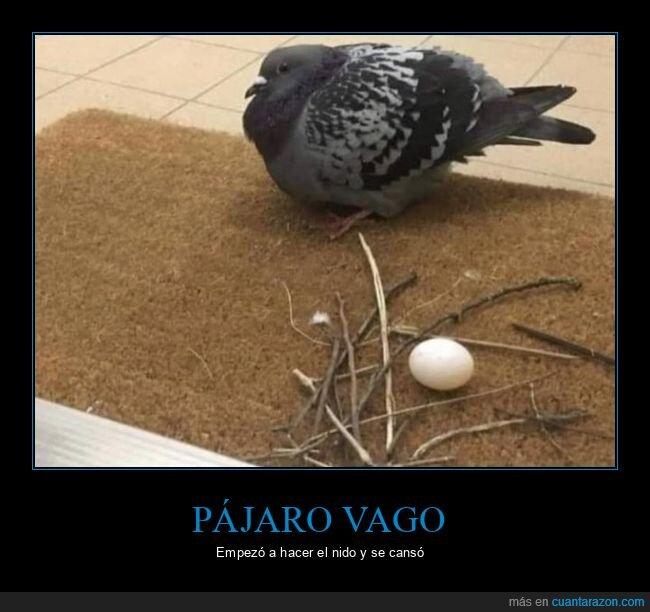 fails,nido,pájaro