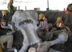 Enlace a Estos de mamuts hallados en una zona donde se construye un aeropuerto