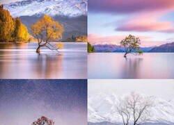 Enlace a Un árbol en el lago Wanaka fotografiado en diferentes épocas del año