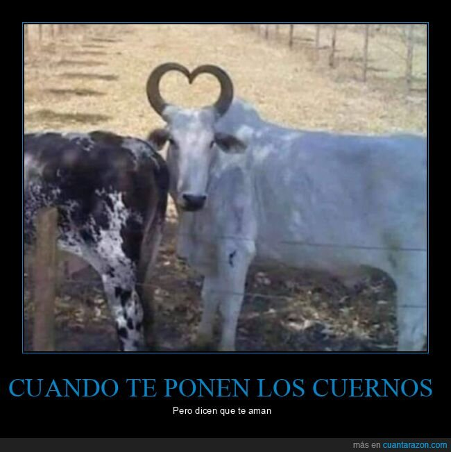 amor,corazón,cuernos,toro,wtf