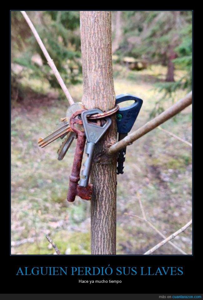 árbol,llaves,perder,wtf