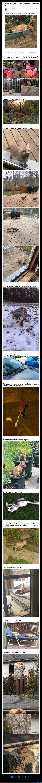 animales,zorros