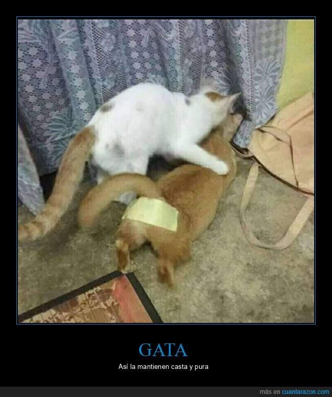 cinta adhesiva,culo,gatos,wtf