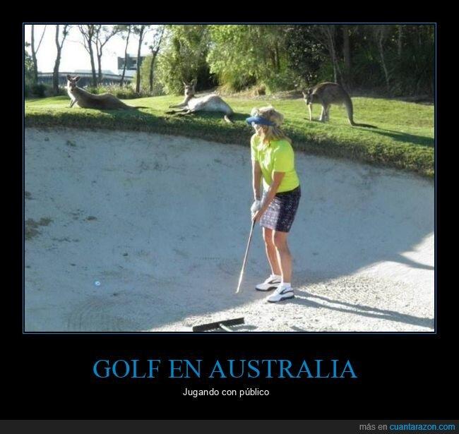australia,canguros,golf