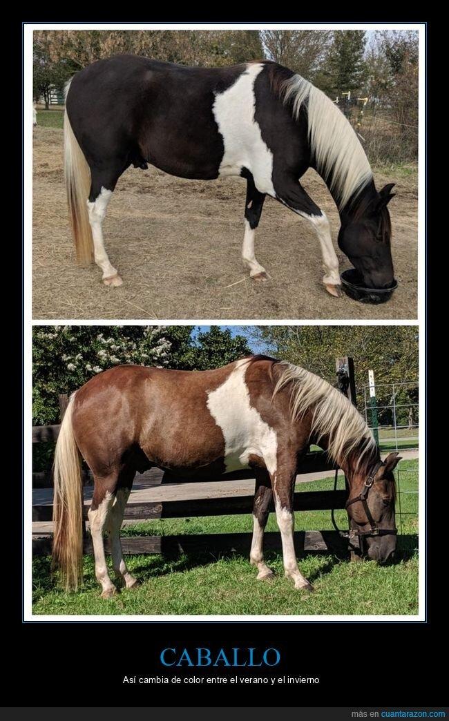 caballo,cambio,color