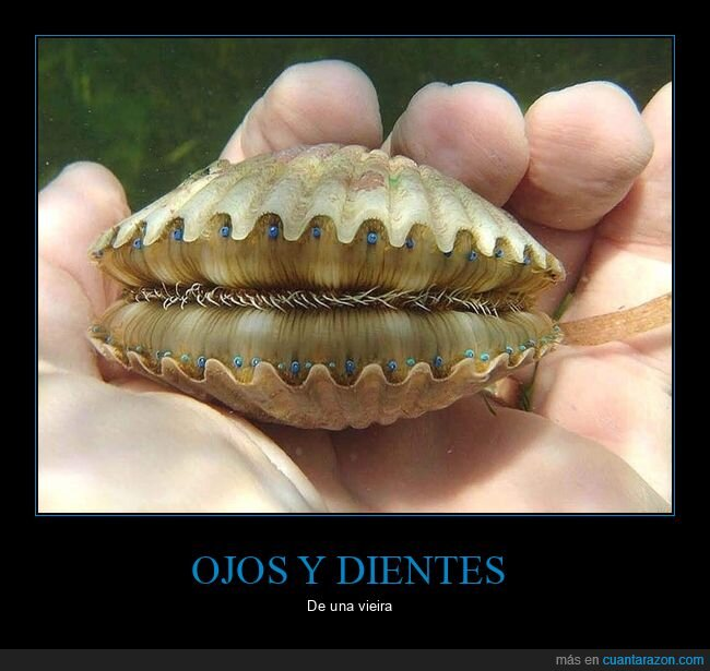dientes,ojos,vieira