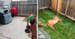 Enlace a Este perro rescatado nunca tuvo un jardín, así que sus nuevos dueños le construyeron uno por sorpresa