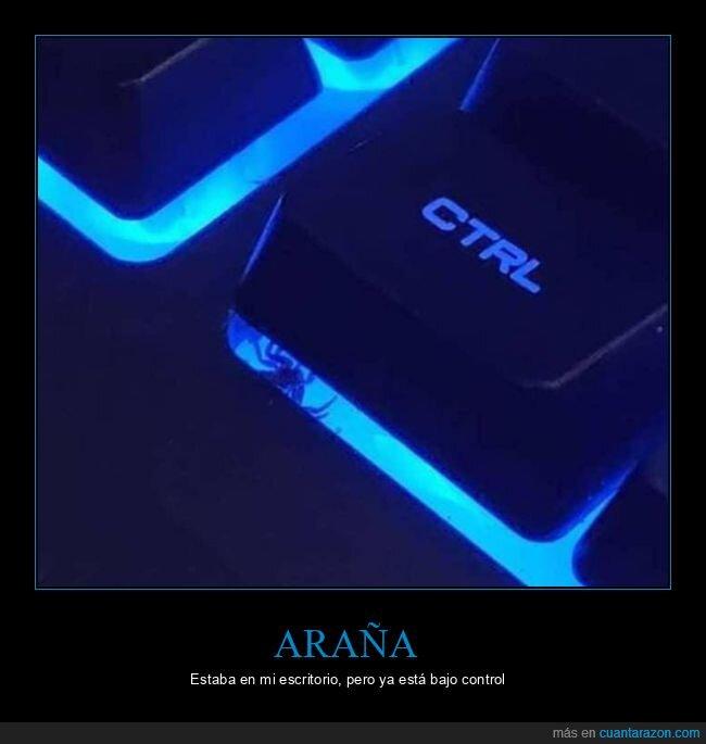 araña,control,teclado
