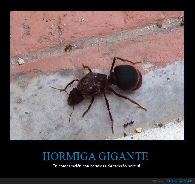 gigante,hormiga,wtf