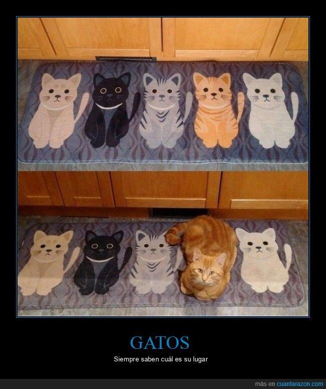 alfombra,gato,lugar,wtf