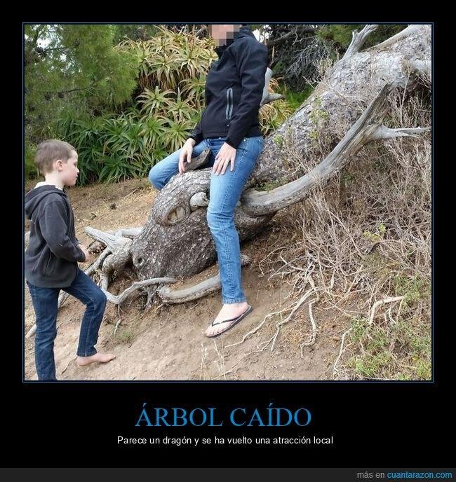 árbol,dragón,parecidos