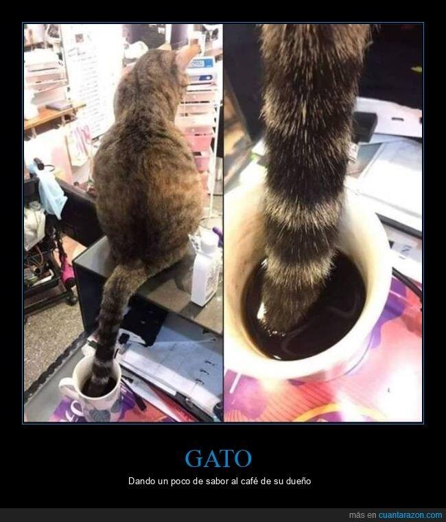 café,cola,gato