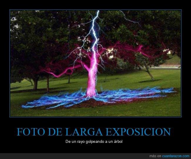 árbol,fotografía,larga exposición,rayo
