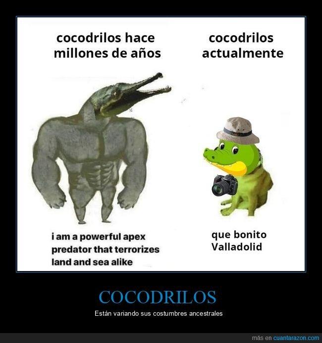 cocodrilo,doge y cheems,valladolid