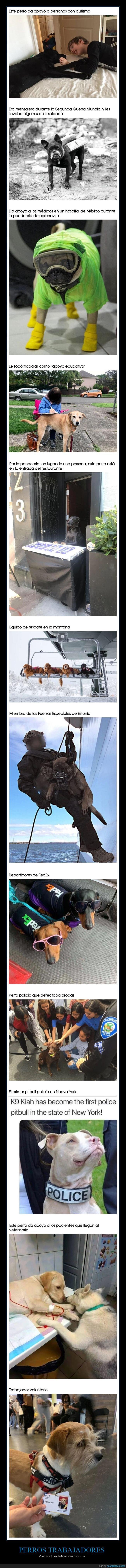 perros,trabajos