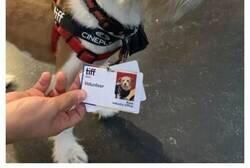 Enlace a Perros que tienen empleos increíbles y no solo se dedican a ser mascotas