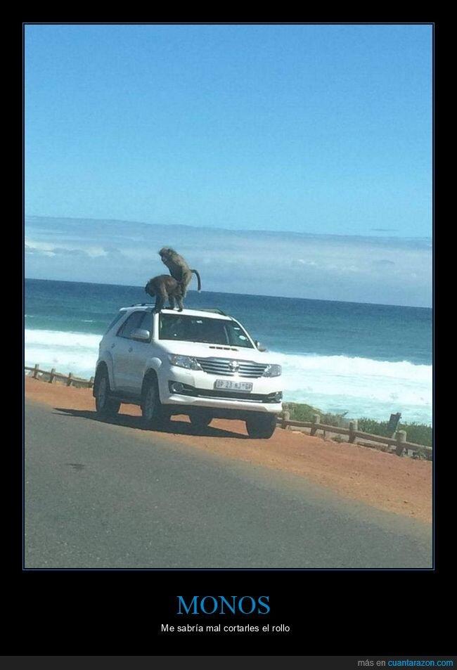 coche,monos,wtf