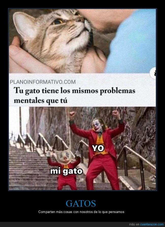 gato,joker,problemas mentales