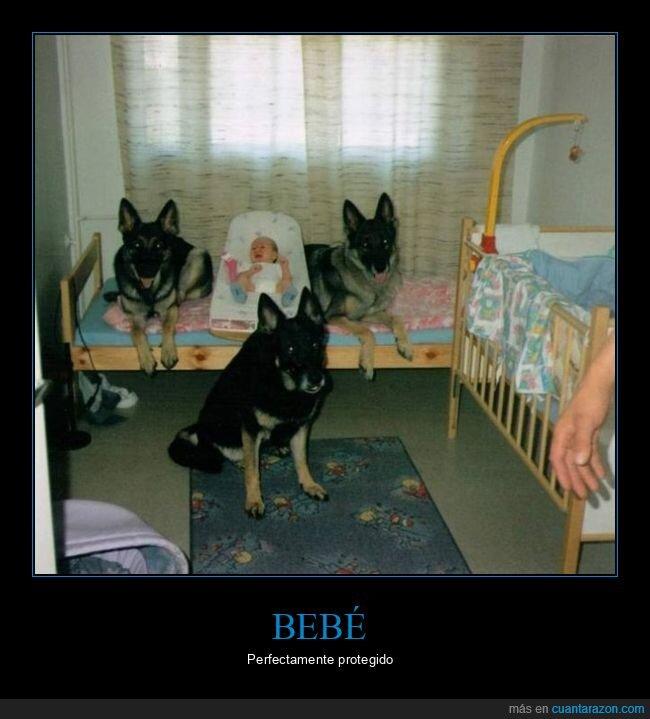 bebé,perros,protección