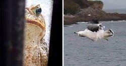 Enlace a Fotos cutres de fauna tan malas que tienes que reírte