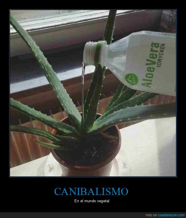 aloe vera,canibalismo,planta
