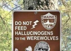 Enlace a ¿No dar alucinógenos a los hombres lobo?