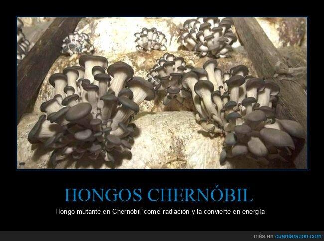 Chernóbil,hongos,setas