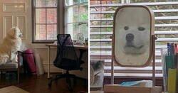 Enlace a Mascotas que han descubierto los espejos
