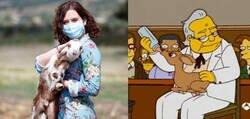 Enlace a En Los Simpson está todo