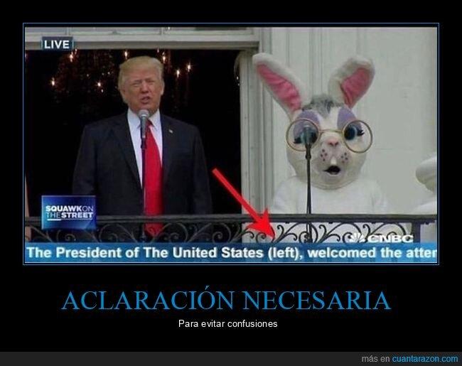 conejo,donald trump,políticos,wtf