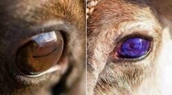 Enlace a Ojos cambiantes