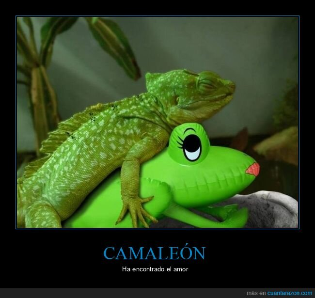 camaleón,muñeco,wtf