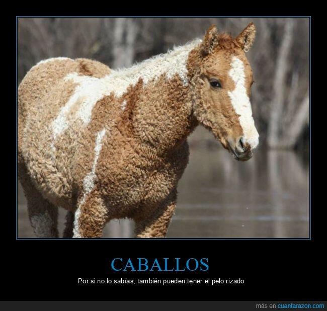caballo,pelo,rizado,wtf