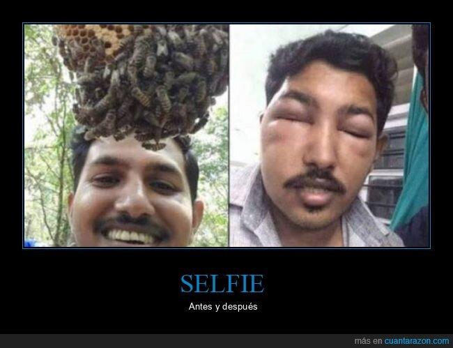 abejas,antes,después,fails,panal,selfie