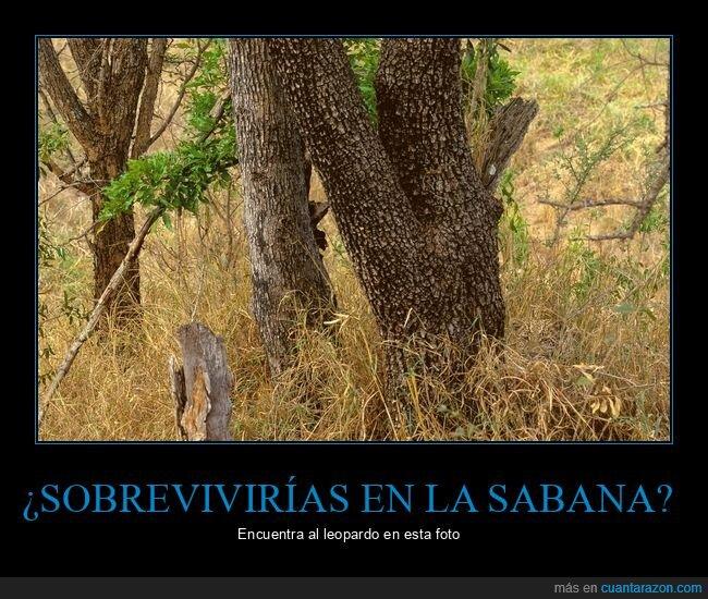 camuflaje,encontrar,leopardo,oculto