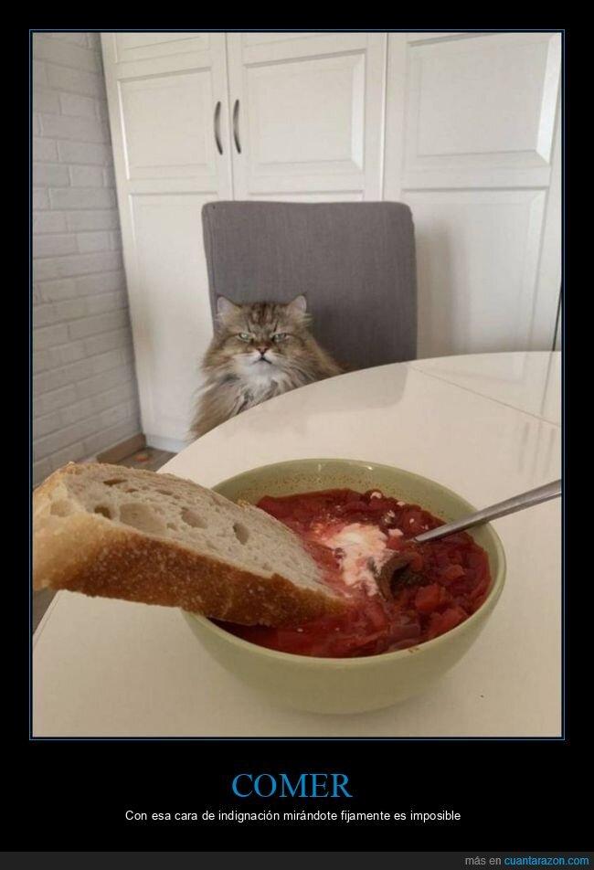 cara,comiendo,gato,mirando