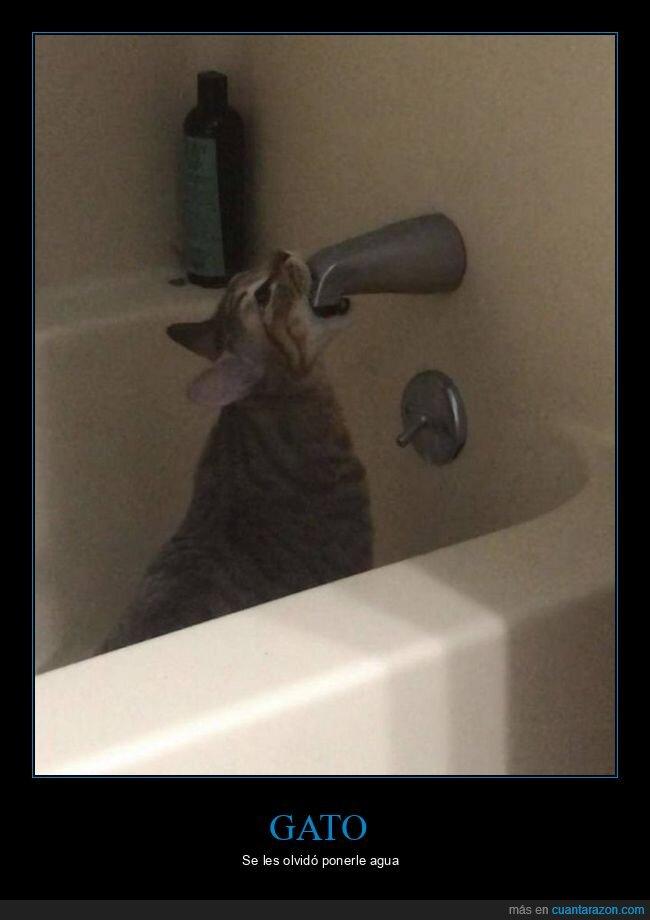 agua,gato,grifo,sed