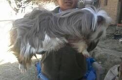 Enlace a ¿Qué raza de perro es?