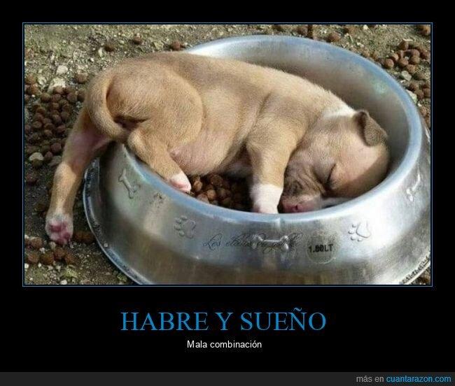 comida,durmiendo,perro