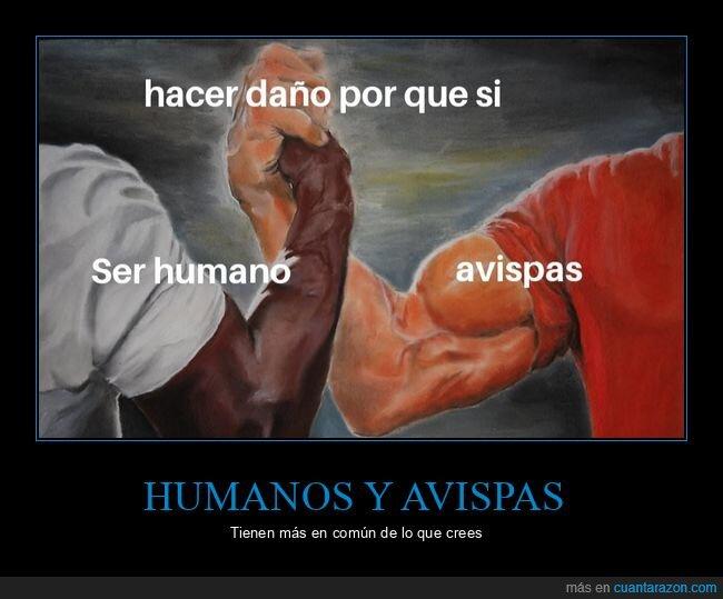 avispas,daño,en común,humanos,porque sí