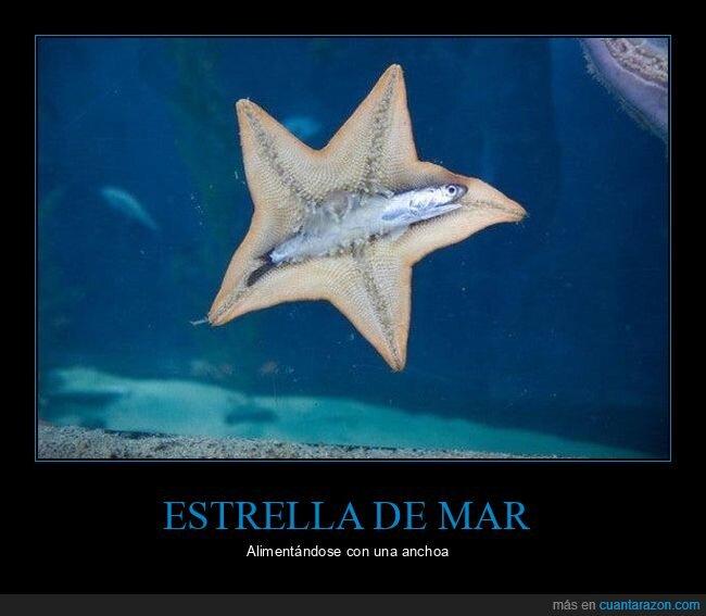 anchoa,comiendo,estrella de mar