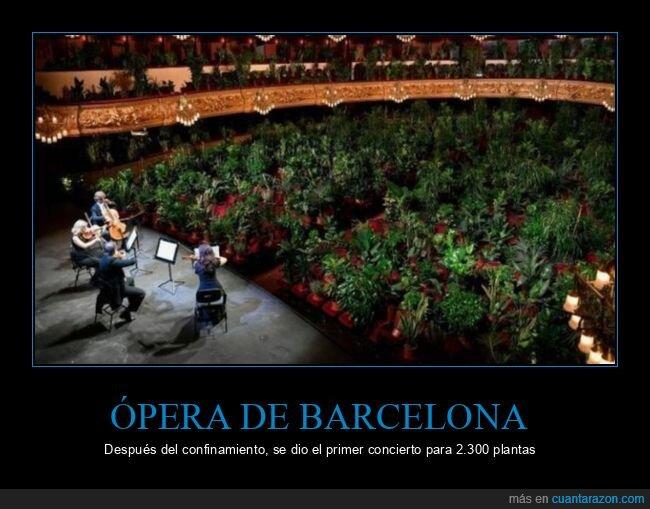 barcelona,concierto,coronavirus,ópera,plantas