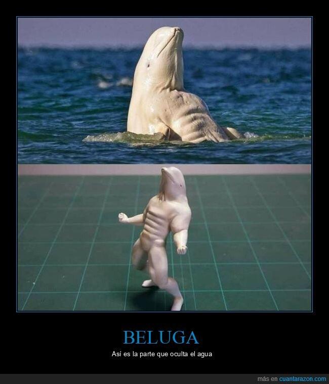 beluga,cuerpo,figura