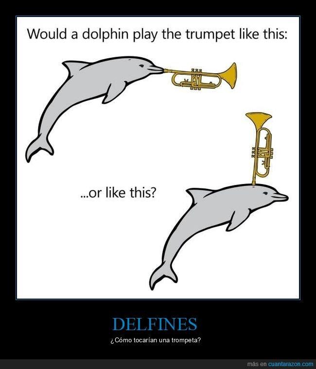 delfines,tocar,trompeta