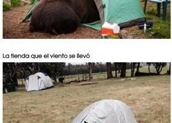 Enlace a Personas que se fueron de acampada y las cosas no salieron como las planearon