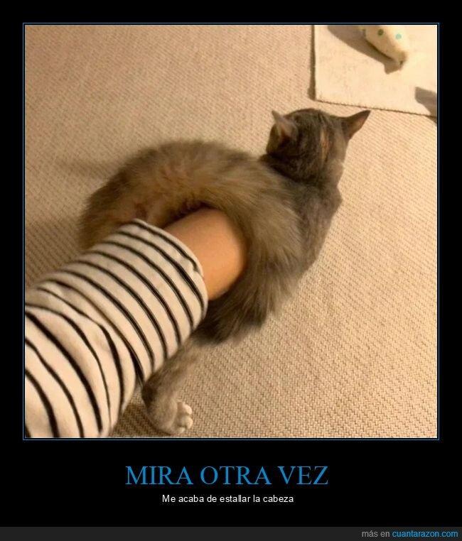 efecto visual,gato,mindfuck